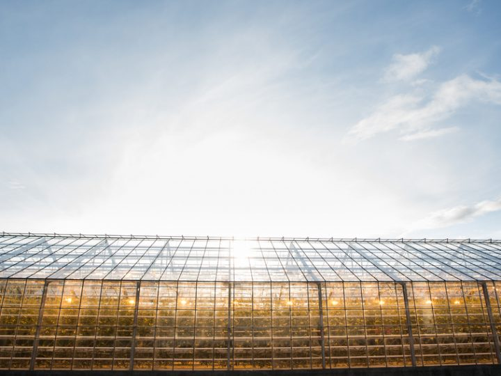 See Monsanto's new greenhouses, part of $400 million expansion