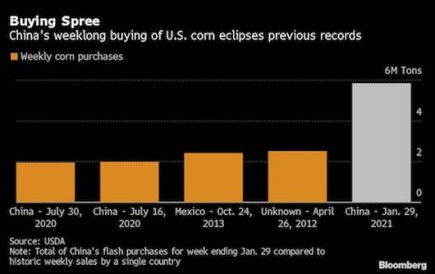 Buying Spree Graph - China's weeklong buying of U.S. corn eclipses previous record